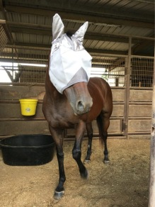 Happy Retirement Zapato! She is enjoying her new home!