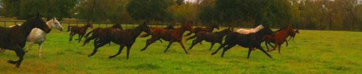 ponies cropped